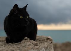 _DSC5253 (Giuseppe Cocchieri) Tags: cat cats gatto gatti animals animali colore colori colour nikon nikkor