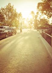 The jogging track (NettyA) Tags: 2016 appleiphone6 australia botanicgardens melbourne treyvenuscanalmanpreset victoria au vic melbournebotanicalgardens jogging track path light backlight parkedcars shadows trees