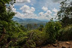 Malaysia_Taman_Negara_28 (Toma.Marinov) Tags: green taman negara rain forest malaysia