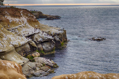 North End of La Jolla Cove (Photos By Clark) Tags: beachshots california canon2470 canon60d cities lajolla locale location northamerica places sandiego subjects unitedstates where hdr lightroom nik hdrefx pacific rocks birds scenic