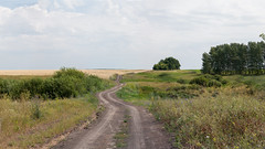 Untitled_Panorama_Fields Road (Nikolay19) Tags: road field summer russia voronezh landscape nature sky grass color light warm