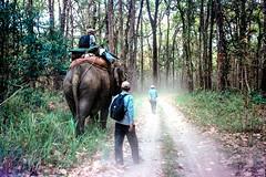 Elephant Safari (hiphopmilk) Tags: film analog analogue 135film 35mm kodak jaredyeh hiphopmilk nepal chitwan national park world heritage site east rapti river sauraha jungle wildlife camp sunali elephant safari ride walk trail trees mahout