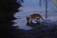 SDIM9413 (@1008988) Tags: sigma foveon merrill sd1m apo50150mmf28exdcoshsm cat straycat