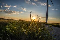 West Texas Morning (5 of 40) (mharbour11) Tags: wildcats elk purple sunrise westtexas texas sky windturbines windmill sun silhouettefire silhouette