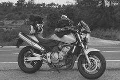 siccia (Eolo2Ruote) Tags: road trip travel viaje bike honda freedom spain highway ride adventure espana riding journey moto motorcycle hornet ontheroad strade viaggio spagna easyrider motocicletta diari controvento cb600f dueruote