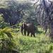 Y1A9405 Tsavo West, Kenya
