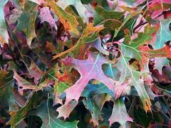 323/365 - Alike (Pixi Pics) Tags: autumn fall 365 365project