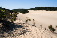 fraser island (AS500) Tags: white lake island bush sand dune australia blow queensland fraser bushwalk wabby