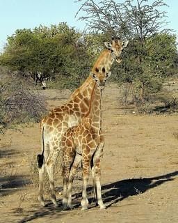 Botswana Hunting Safari 36