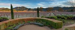 "Napa Sunrise Panorama (12""x30"") (JMichaelSullivan) Tags: california panorama sunrise 100v 10f 600v napa dxo 200v 500v 700v 300v 2011 5f mjsfoto1956 400v autopanopro opticspro"
