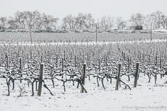 L'Arbo_Nevat_2015_low-110 (Oscar Mendez - photographer) Tags: winter paisajes snow cold landscape frozen frost nieve invierno olivos febrero frio neu vias papiol masia oliveres vinyes peneds larbo