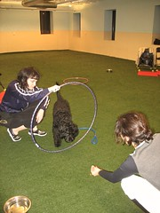 "Emily assists Alexis with Sailor (Fastest Sitter) • <a style=""font-size:0.8em;"" href=""http://www.flickr.com/photos/65918608@N08/16398012918/"" target=""_blank"">View on Flickr</a>"