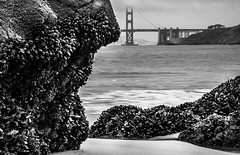 the crusty shore (pbo31) Tags: ocean california winter blackandwhite shells beach northerncalifornia nikon rocks pacific gray depthoffield seacliff 101 goldengatebridge shore bayarea chinabeach february bakerbeach crusty d800 2015 boury pbo31 patrickboury