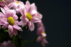 Flowers - close up (Rach_3) Tags: flowers flower closeup canon300d