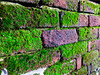 25th Feb: All Those Tiny Worlds... (Richard Hone) Tags: uk brick wall moss stanleypark groundlevel blackpool day56 ratseyeview microworlds tinyworlds day56365 365the2015edition 3652015 agingbrickwall 25feb15