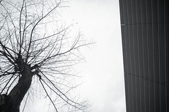 56/365-2015 (Nejc Menard) Tags: bw tree silhouette fuji 365 x100