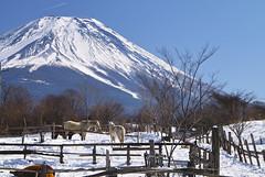 Countryside (Hiroya1128) Tags: japan digital sigma mtfuji sd1 platinumphoto