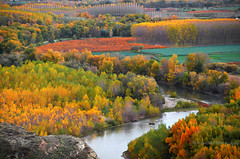 Autumn Colors On The Ebro River (RicardMN Photography) Tags: wood autumn trees red color fall nature water leaves yellow forest river print poster landscapes spain colorful livingroom canvas rivers posters impressionism prints deciduous ebro riverbank interiordecoration rioja waitingroom navarre brushstrokes pictorial navarra autumncolor deciduousforest autumnlight colorfulleaves ebroriver pictorialism ebrovalley autumnlandscape ricardmn colorfulleaveslandscape ricardmnphotography