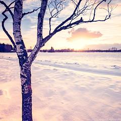 Every Motion (Sigurd Quast) Tags: schnee winter sunset snow ice canon germany deutschland eos sonnenuntergang bad m eis federsee buchau