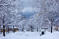 A Walk to School (AdamJiaoshi) Tags: trees winter snow europe sofia bulgaria balkans easterneurope balkan easternbloc vitosha americancollegeofsofia americancollege