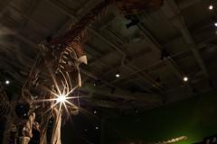 Swallowed a Flashlight? (Phil Roeder) Tags: dinosaur iowa bones desmoines canon15mmf28 sciencecenterofiowa
