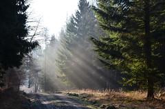 DSC_2452 eine märchenhafte Atmosphäre am morgen - a fairytale atmosphere in the morning (baerli08ww) Tags: winter light sun mist forest germany landscape deutschland licht nebel natur landschaft sonne wald morningsun rheinlandpfalz morgensonne waldweg westerwald rhinelandpalatinate foresttrail nikond5100 westerforest