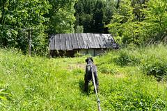 DSC_2459 (czargor) Tags: mountains landscape hill mountainside beskidy inthemountain dogtrekking beskidzywiecki