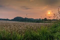 Sonnenuntergang (stevepe81) Tags: sunset baumberge natur sonnenuntergang havixbeck weizenfeld abend sony alpha 6000 münsterland feld himmel gras landschaft outdoor pflanze