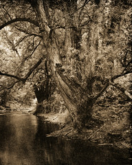 (Mark Magin) Tags: 4x5 aristalith darkroomprint lith rivertree shenhao fomabromvcfbvariantiv123 nikkor135