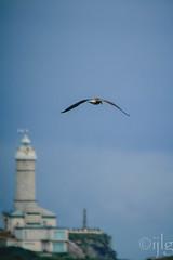 24072016DSC_0212.jpg (Ignacio Javier ( Nacho)) Tags: naturea gaviotas aves facebook flickr faunayflora