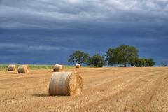 Alors que se termine la moisson (Excalibur67) Tags: nikon d750 sigma 24105f4dgoshsma paysage landscape rundball ciel cloud sky nature nuages