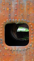 Iron Atrium (Dan Beland) Tags: rainforest hyderalaska alaska rotting decaying rusting unitedstates usa northamerica artistic art nature canonsx720hs outdoor fern atrium metal rust iron old antique abandoned tank