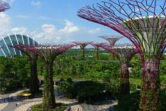 Tree groves at Gardens by the Bay (Cagsawa) Tags: garden gardensbythebay park nature naturepark supertreegrove supertree grove marinabay singapore walkway green lx5 dome