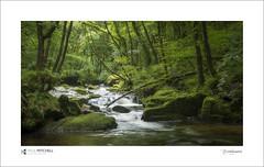 Golitha Falls (tobchasinglight) Tags: golithafalls cornwall stneot liskeard bodminmoor