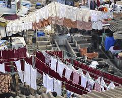 Open-air laundry, Mumbai, India (Jacada Travel) Tags: asia business cleaning clothing colors dhobi dry effort exoticism famousplace ghat india indianculture laundry linen maharashtra men multicolored mumbai outdoors people poverty roof slum sunny washing water working