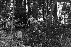 Yoyogi Park, Tokyo (fabiolug) Tags: kids kid children child playing trees tree nature park yoyogipark people street streetphotography tokyo japan japanese asia leicammonochrom mmonochrom monochrom leicamonochrom leica leicam rangefinder blackandwhite blackwhite bw monochrome biancoenero 35mmsummicronasph 35mmf2summicronasph summicronm35mmf2asph summicron35mmf2asph 35mm summicron leicasummicron leica35mm