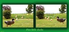 ...Five Little Ducks... (cegefoto) Tags: 116picturesin2016 nurseryrhyme kinderrijmpje fivelittleducks photoshop pscc eend duck heuvel hill boom tree grass gras