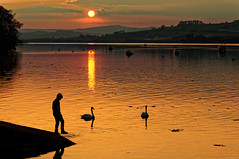 Sunset Boy with Swans. (Malinki_Malinki) Tags: sunset boy silhouette swans splash toedip shaldon teignmouth devon england uk water river estuary boats reflections clouds landscape postcard orange red sky calm peaceful playful play ripples golden scenery people nature light sun sea outdoor serene seaside shore sunrise skyline ray rays rayofsunshine horizon ships shoreline splashes poster pleasant relaxed relaxing chilled summer latesummer midsummer child dawn recreational colored colorful fiery dusk warm breeze hot bright shades hues cloud cloudy shade perspective beautiful bliss evening