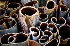 Bark (Ben Nakagawa) Tags: abstract2016 bark film tree abstract stilllife
