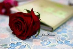 بَعضُ الأشيَاء نَحتاجُهَا ، وَأخرَى نَتمناهَا ؛ وَلا نَحصلُ إلا عَلى مَاقدرهُ الله لنَا .. فَ اللهُم قَدر لنَا الخَير حَيثْ كَانْ ثُمَ ارضنَا بَه #flower #flowers #ورده #تصويري #جوري (Fatoom.Grapher) Tags: flowers flower تصويري ورده جوري
