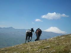 n (6) (yaghan.horses) Tags: horse mountain nature cheese russia smoking riding caucasus horseback saddle elbrus circassian circassia circassians kabardin
