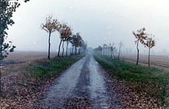 living in the ice age - analog (Stefano☆Majno) Tags: road winter plants film analog canon fuji rice ae1 farm perspective 200 depression analogue expired stefano pellicola majno