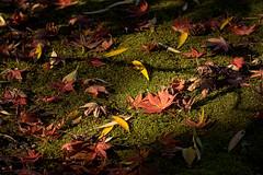 Autumn leaves () (christinayan01) Tags: autumn fall nature leaves leaf ground foliage