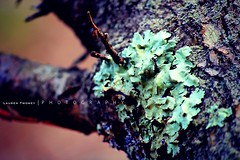 Turquoise lichen. (k e n t u c k y  d r e a m e r) Tags: color tree nature woods turquoise bark lichen