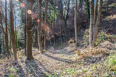 IMG_1662.jpg (gianni.giacometti) Tags: italia sentiero carnia montagna bosco friuli cammino tolmezzo