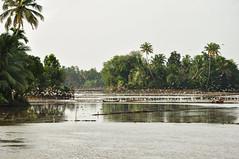 Alleppey, Kerala (jitin914) Tags: india lake birds kerala cranes ricefield backwaters coconuttrees alleppey nikond90