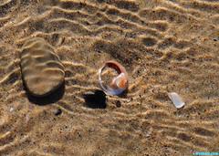 UnderWater (mcshots) Tags: ocean california winter sea usa shells beach nature water rock seashells coast sand stock sealife socal flotsam mcshots treasures mollusks snailshell losangelescounty