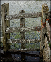 Weathered (Tom Lloyd ABIPP, ARPS) Tags: texture fence reflections moss lichen aged romneymarsh weatherd