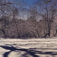 65 | 365: Like From A Novel (phillytrax) Tags: city trees winter shadow urban usa snow philadelphia nature america square unitedstates natural westphiladelphia pennsylvania pa squareformat metropolis philly crema metropolitan westphilly 215 haddington cityofbrotherlylove cobbscreekpark iphoneography instagram instagramapp uploaded:by=instagram