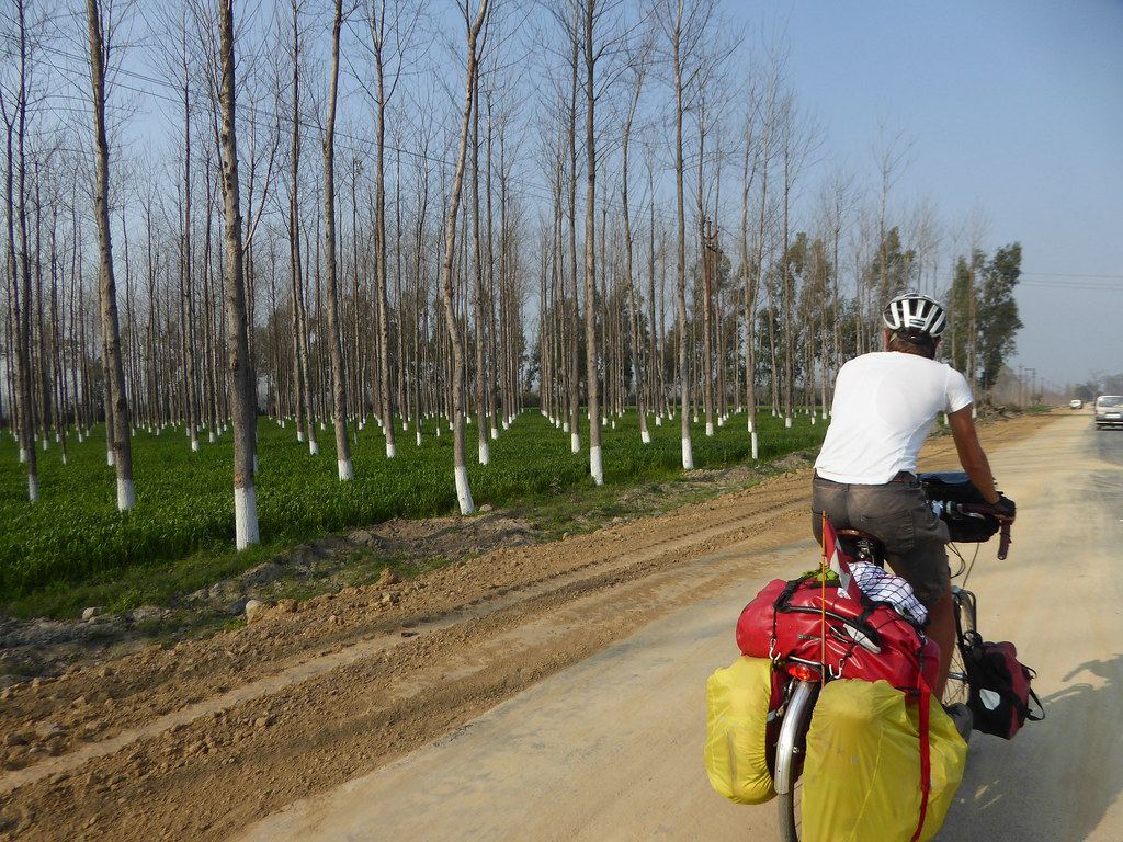 Riding by wheatfields